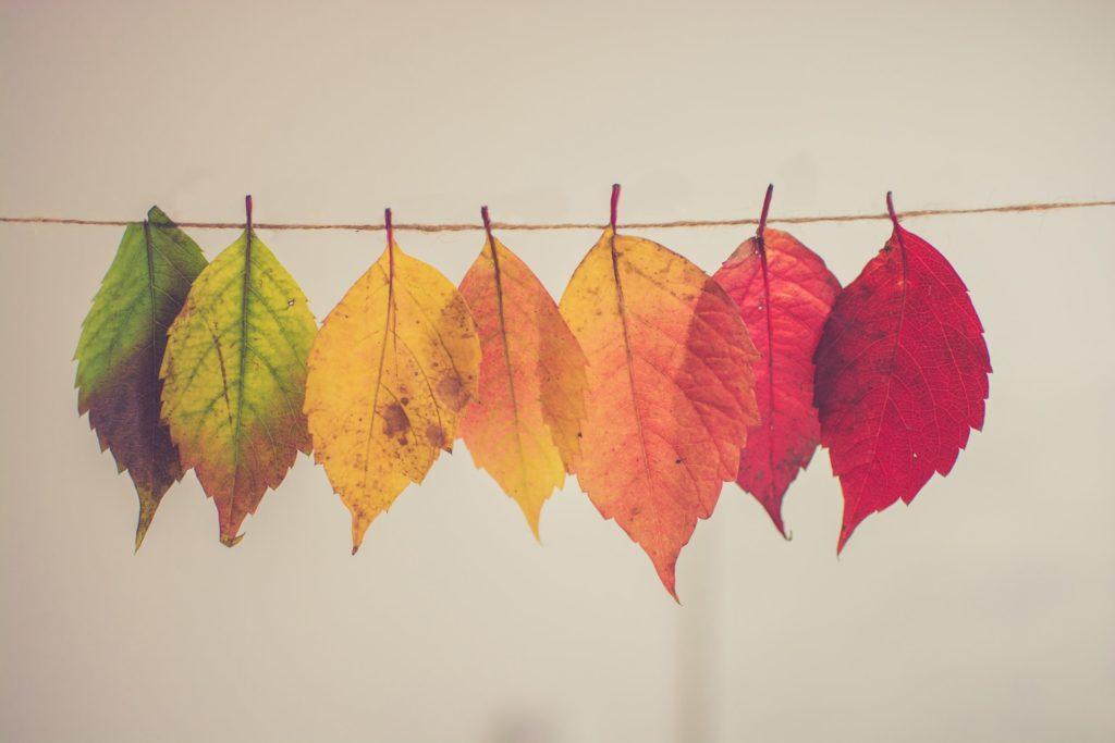 葉っぱ 変化