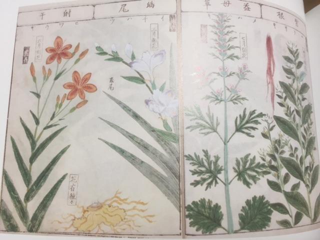 松山本草図譜抄録 草上13-14頁(森野旧薬園と松山本草 より)