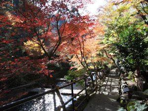 秋の紅葉も澄んだ空気でよりキレイ