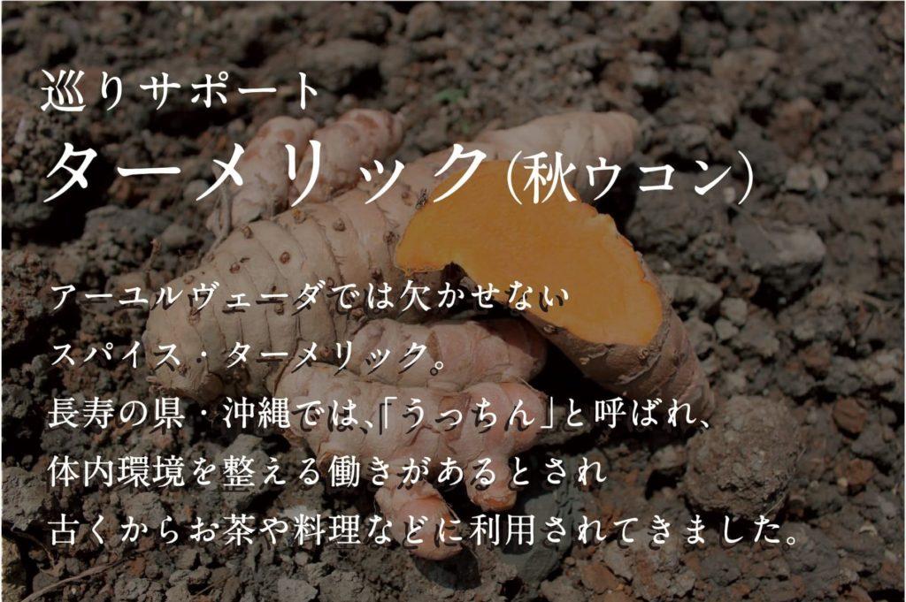 沖縄皇金_ターメリック