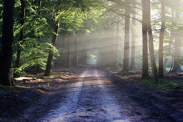 木漏れ日のさす道