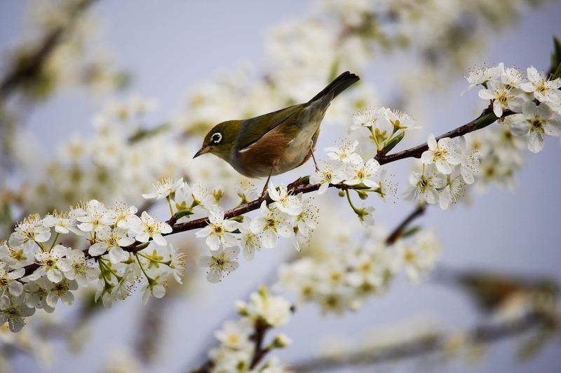 枝にとまる鳥